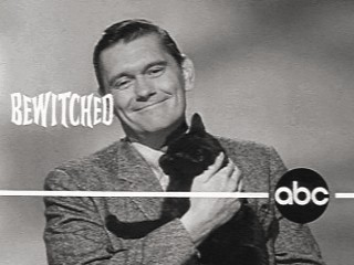 Bewitched York Cat Promo!